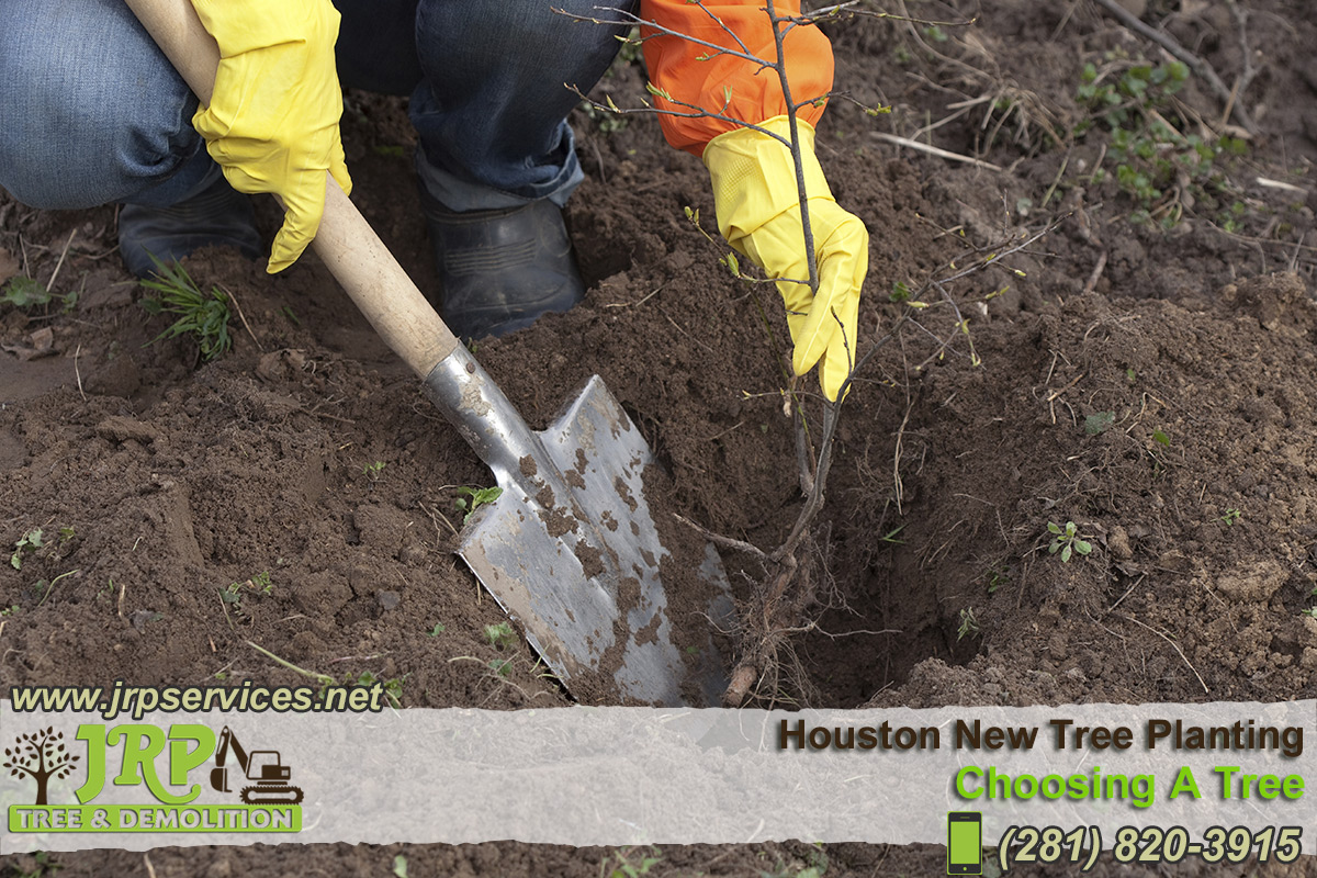 07-Houston-New-Tree-Planting