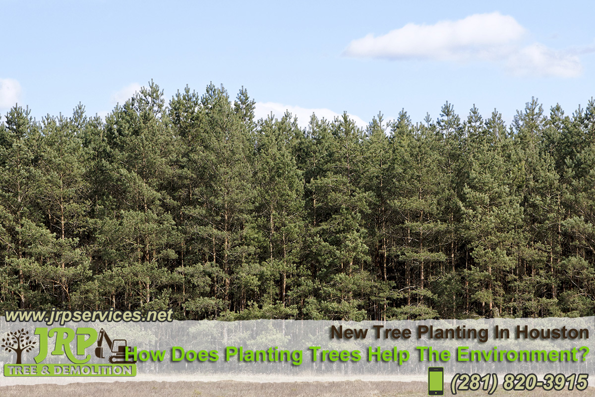 12-New-Tree-Planting-In-Houston
