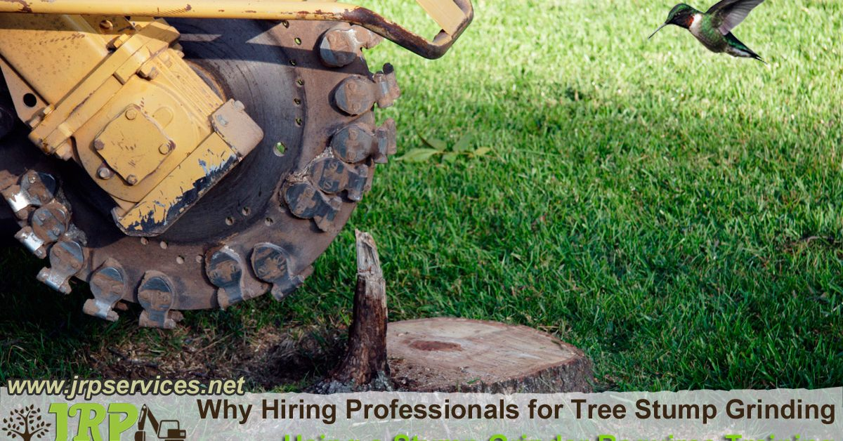 We provide stump removal!