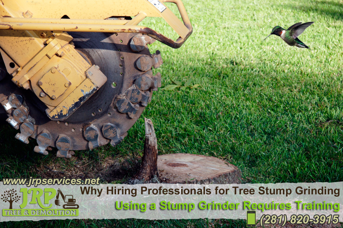 23-Tree-services-in-Houston-TX