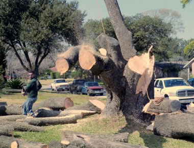 We provide various tree services.