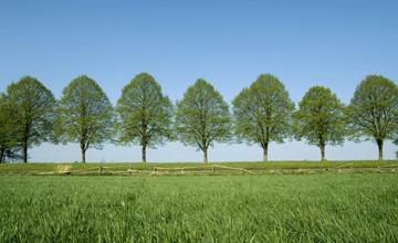 tree-planting-pic