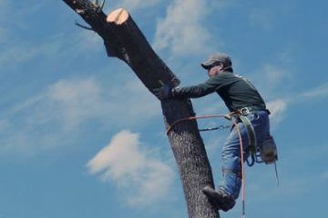 Tree removal is one of our specialties.