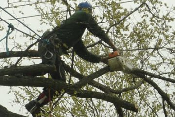 Preserve your tree with appropriate pruning.