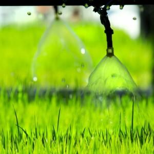 drip irrigation bakersfield