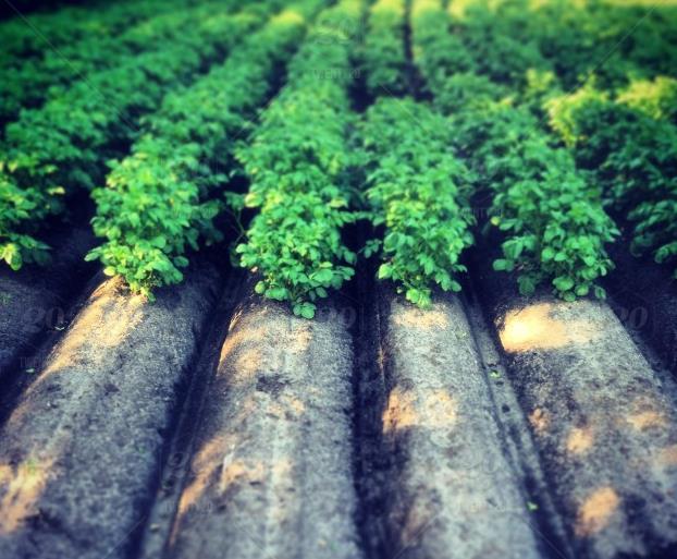 Irrigation Supplies Bakersfield