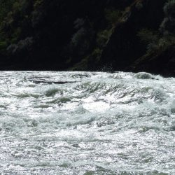 Salmon fishing river