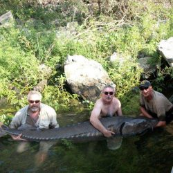 three men and large sturgeon