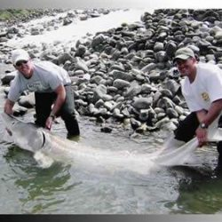 two men and a large white sturgeon
