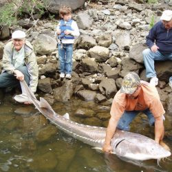 three men and a small boy with a large sturgeon in Idaho