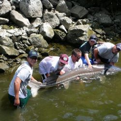 three men, a boy and a woman with a large sturgeon