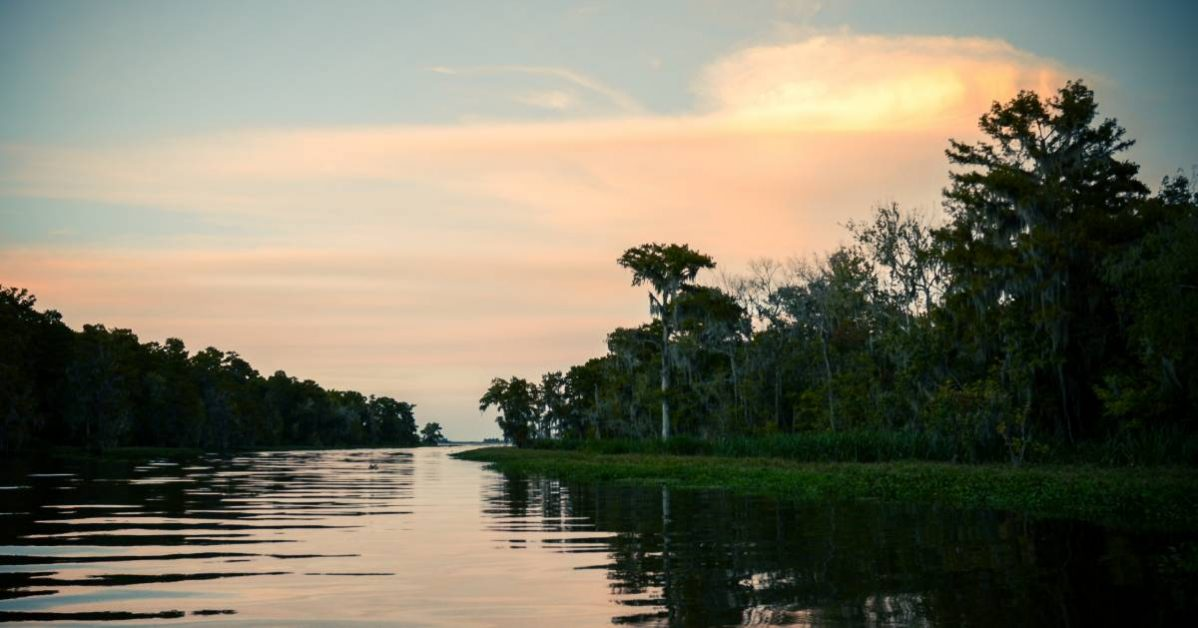 An image of some Louisiana scenery.