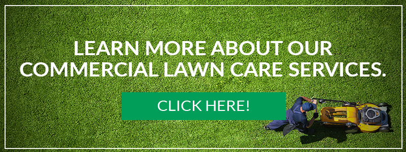 CTA_ Learn more about our commercial lawn care services