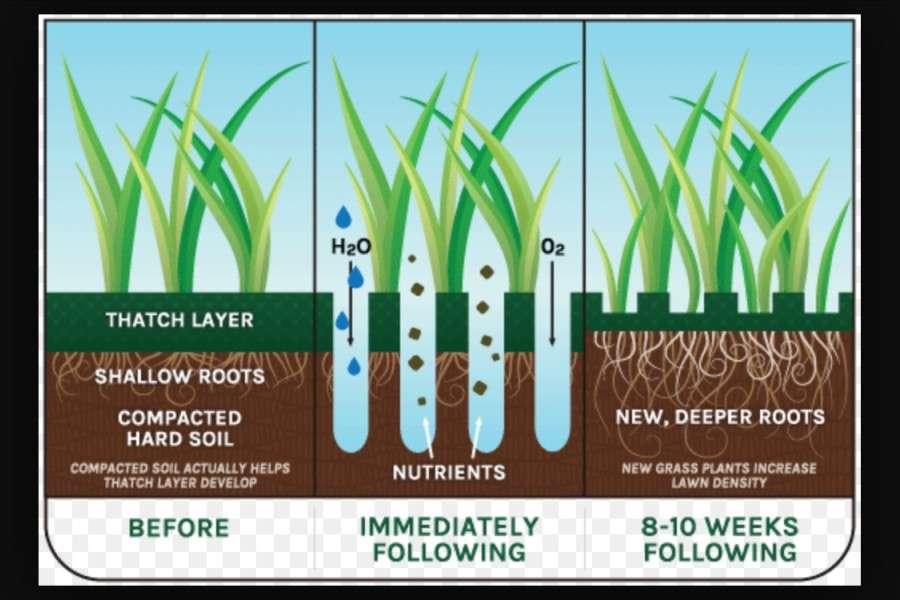 what is aeration and overseeding