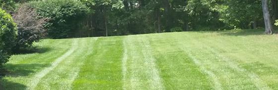 Lawn maintenance sanford nc, lawn care service sanford nc