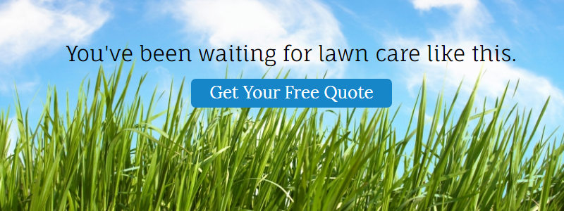 youve-been-looking-for-lawn-care-like-this