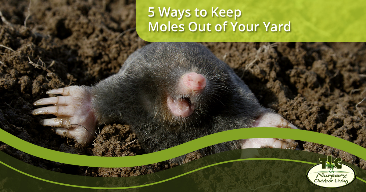 5 Ways To Keep Moles Out Of Your Yard Tlc Nursery Outdoor Living