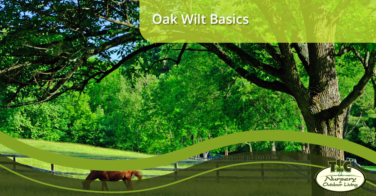 Garden Center Independence: All About Oak Wilt
