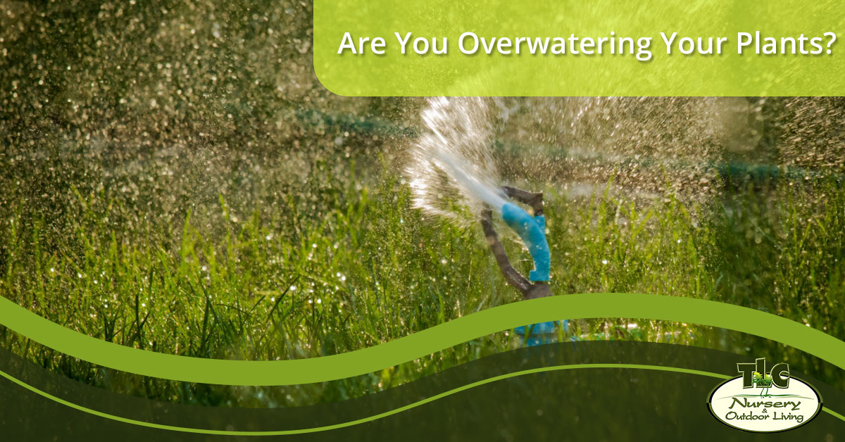 Are You Overwatering Your Plants? | TLC Nursery & Outdoor Living