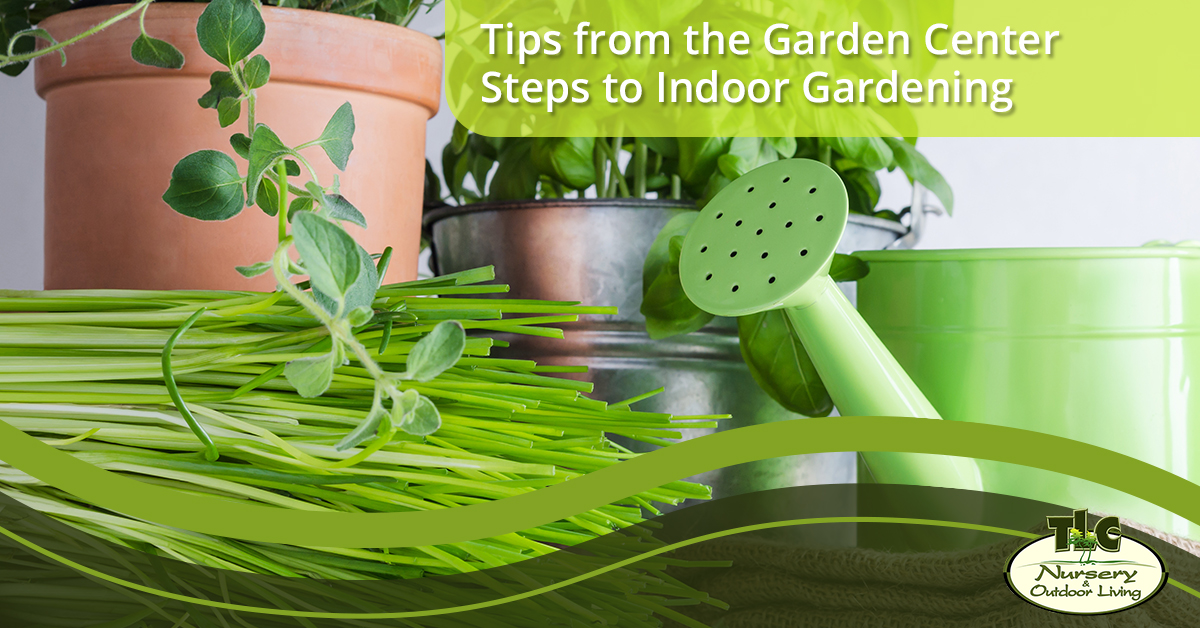 Tips from the Garden Center—Steps to Indoor Gardening | TLC Nursery ...