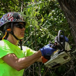 Worker Using Chainsaw to Cut Tree Branch