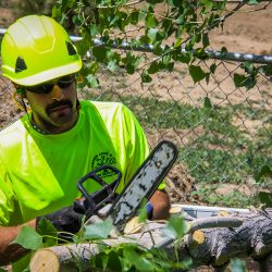 Worker Cutting Tree Branches