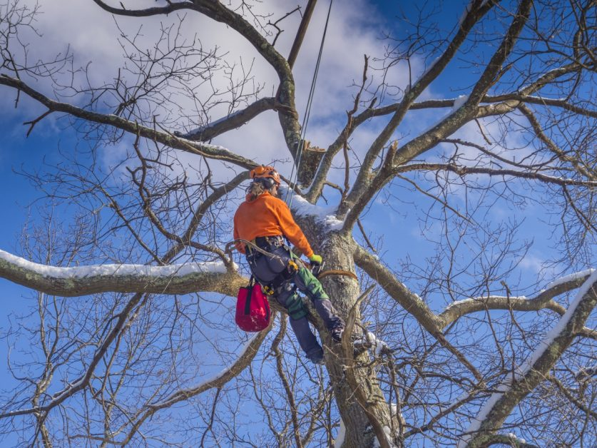 Tree Care Expert Cutting Top of Tree