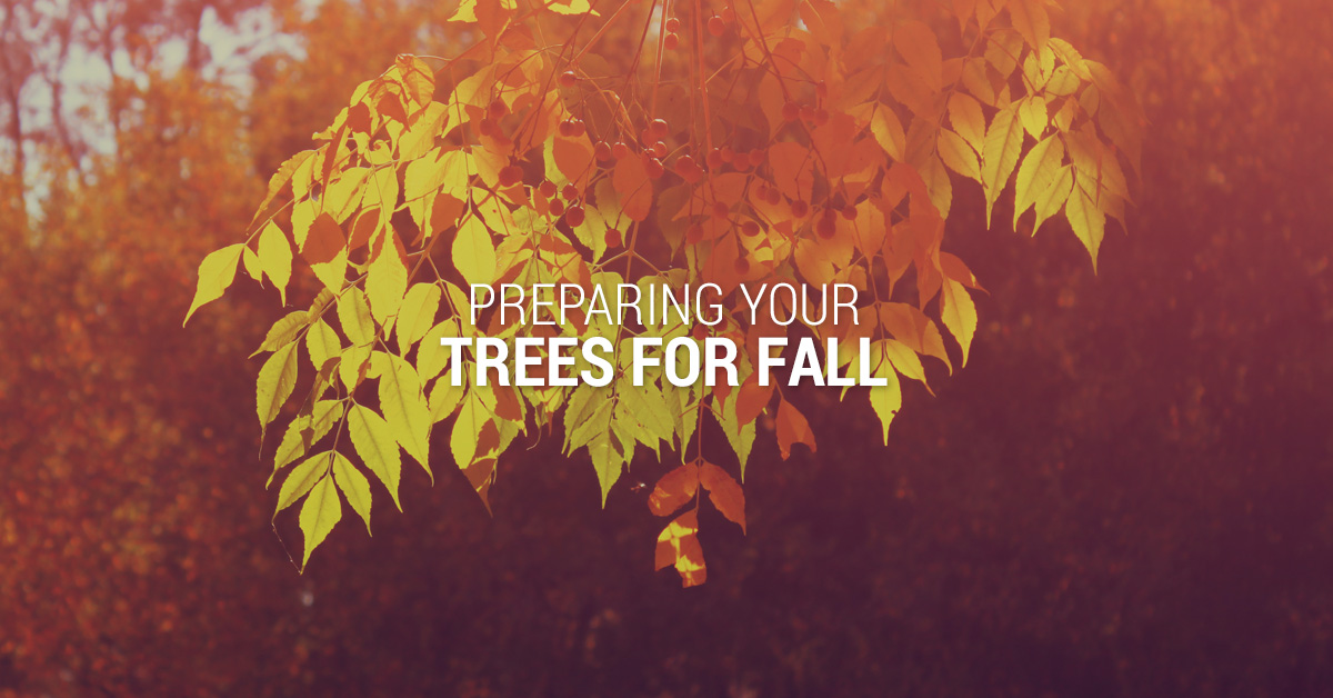 Preparing Your Trees for Fall Banner