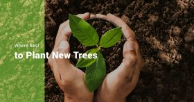 Where Best to Plant New Trees Banner