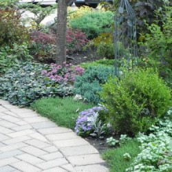 Lawn And Landscape Gardens