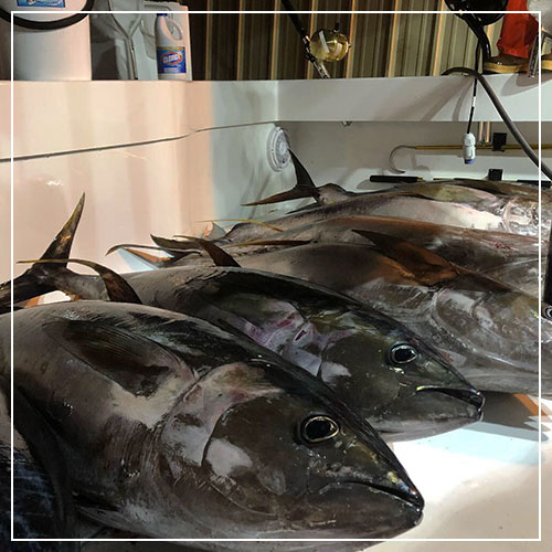 corporate fishing trips lousiana bluewater charter company venice