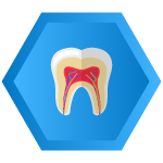 Tooth Root Icon