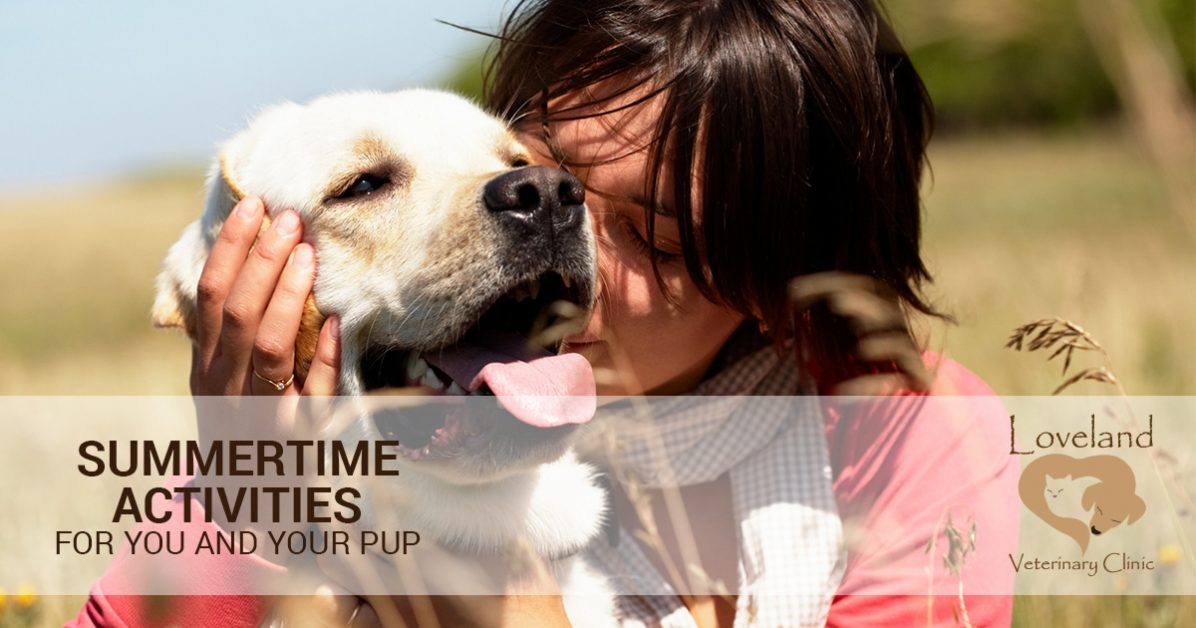 veterinarian loveland summertime activities for you and your pup