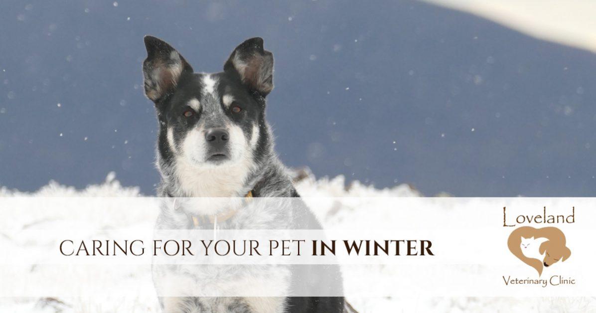 Veterinarian Loveland Winter Care For Your Pet