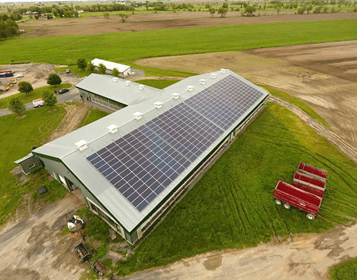 solar for dairy farms