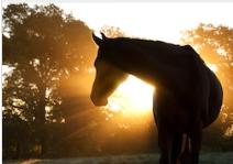 horse in sunlight