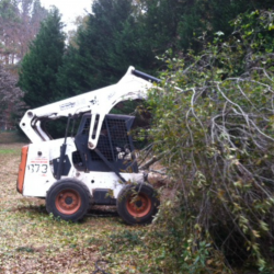 tree maintenance Auburn