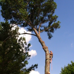 tree removal services Auburn