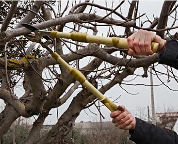 tree pruning Auburn, GA - Mandella's