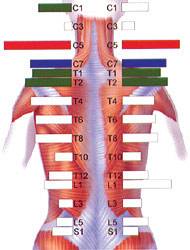Stress in the Spine