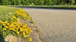 Weeds Growing in Cement Cracks