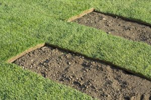 Installing sod for your lawn