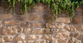 photo of a wall with plants