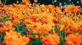 image of beautiful flowers