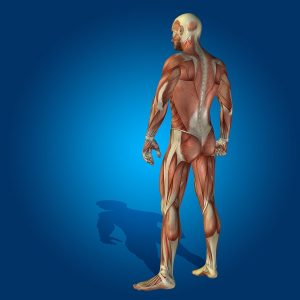 Identifying Your Disability Under The Listing Of Impairments: Musculoskeletal System - Part 1: Loss Of Function & Pain