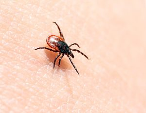 I Have Lyme Disease - Am I Entitled To Disability Benefits? Part 3: Qualifying Despite Failing To Meet A Listing