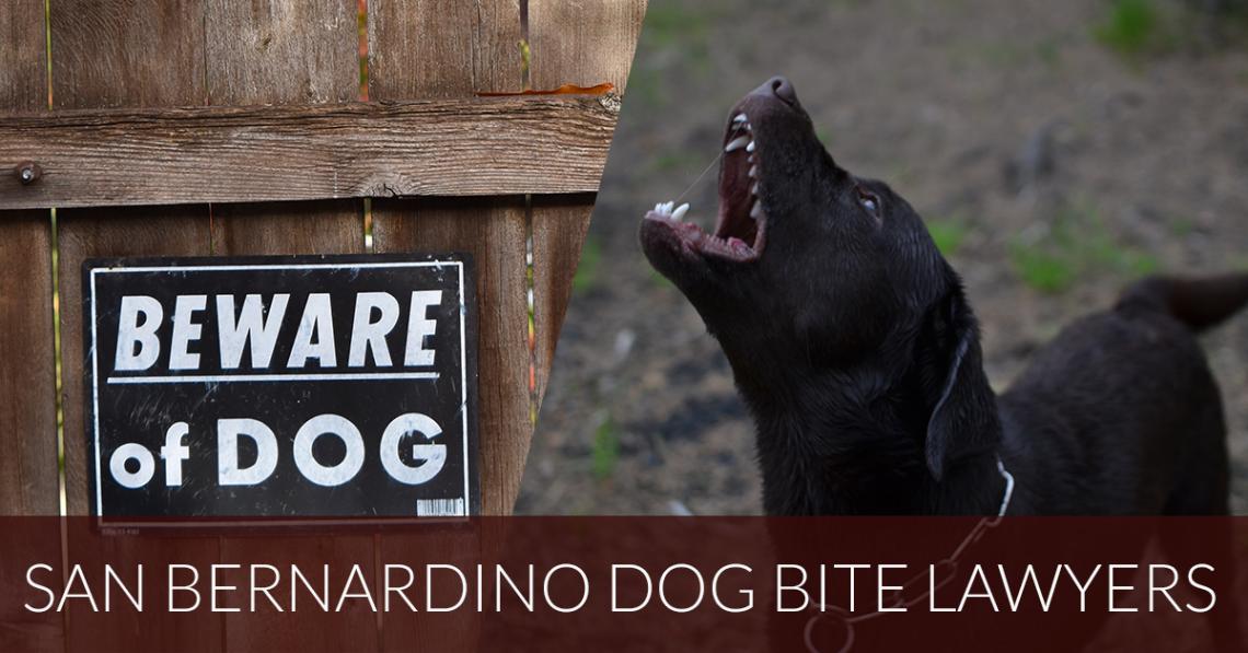 san bernardino dog bite lawyer