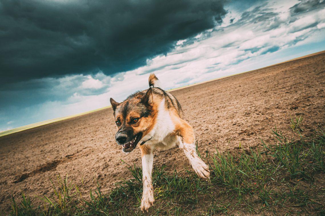 agressive dog bite teeth