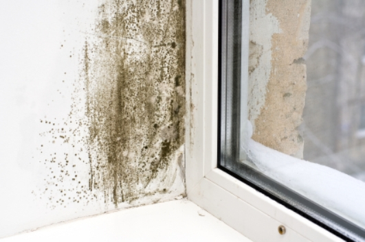 White wall near a window with visible mold.
