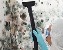 Mold Cleaning Services from the #1 Black Mold Removal Service in Colorado
